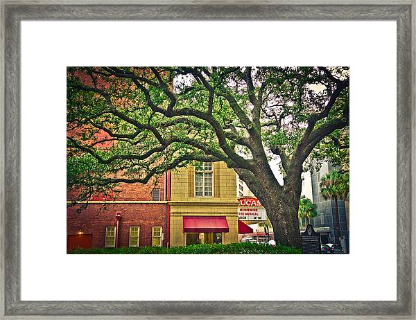 Savannah Square Framed Print