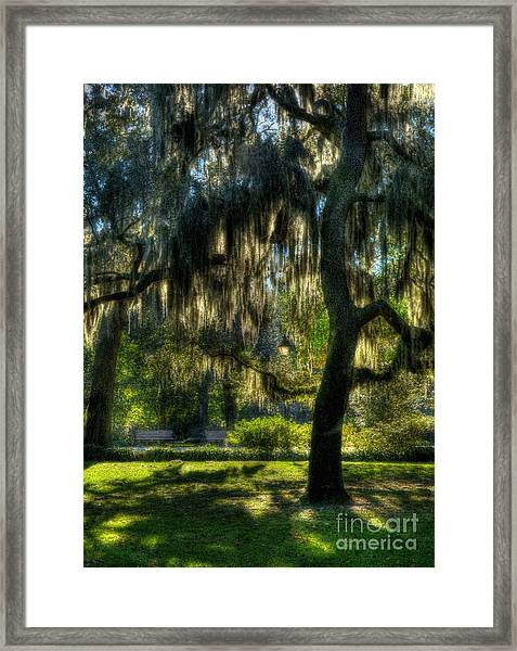 Framed Print featuring the photograph Savannah Sunshine by Mel Steinhauer