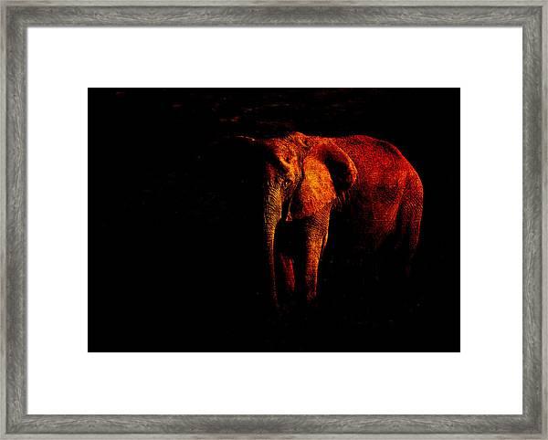 Save The Elephant Framed Print