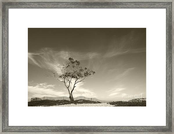 Save The Tree Framed Print