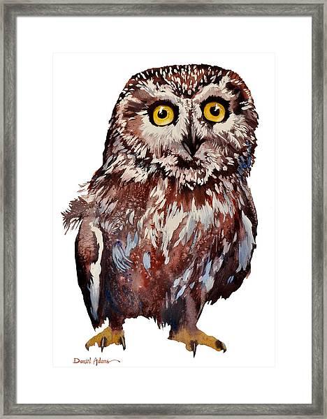Da148 Saw Whet Owl Daniel Adams Framed Print