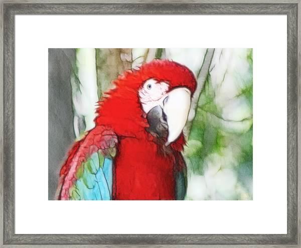 Scarlet Macaw Framed Print