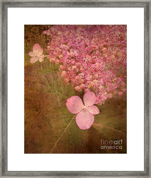 Scent Of Hydrangea Framed Print