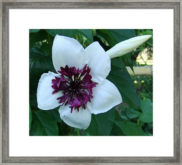 Framed Print featuring the pyrography Scented Beauty by Eric Kempson