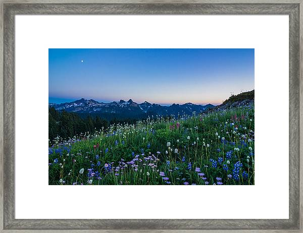 Scented Twilight Framed Print
