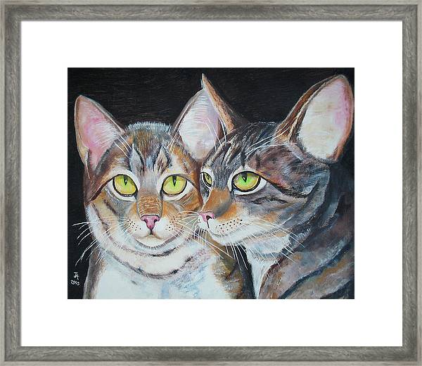 Scheming Cats Framed Print