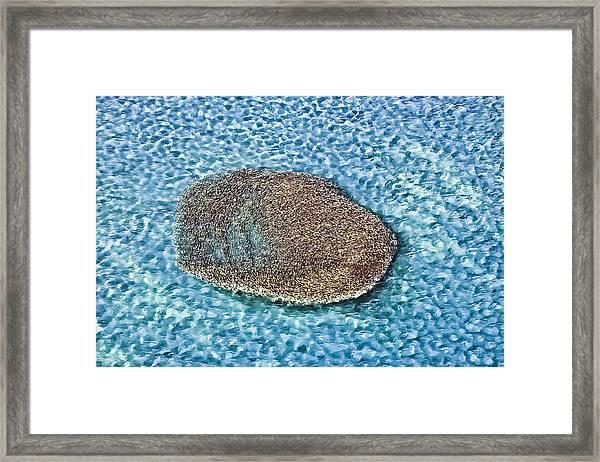 School Of Fish 5 Framed Print