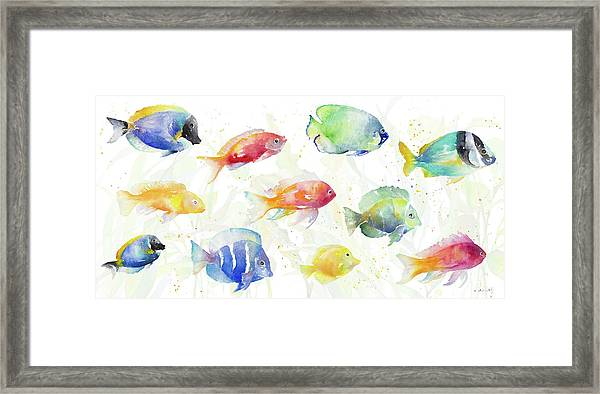 School Of Tropical Fish Framed Print