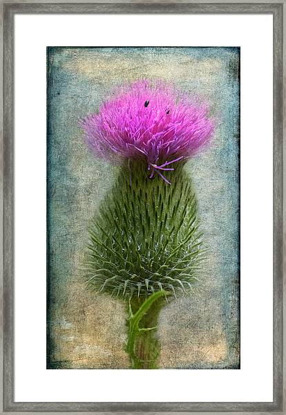 Framed Print featuring the photograph Scotch Thistle by Garvin Hunter
