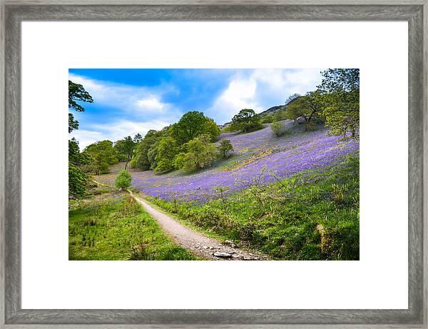 Scottish Bluebells On The Hillside Framed Print by Alex Zorychta