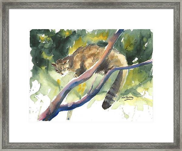 Scottish Wild Cat In A Tree Framed Print