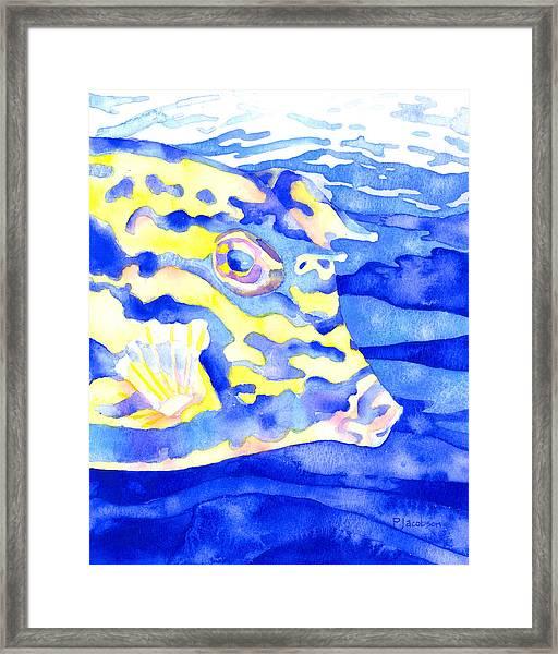 Scrawled Cowfish Portrait Framed Print