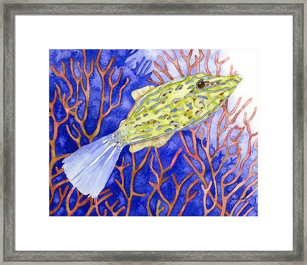 Scrawled Filefish Framed Print