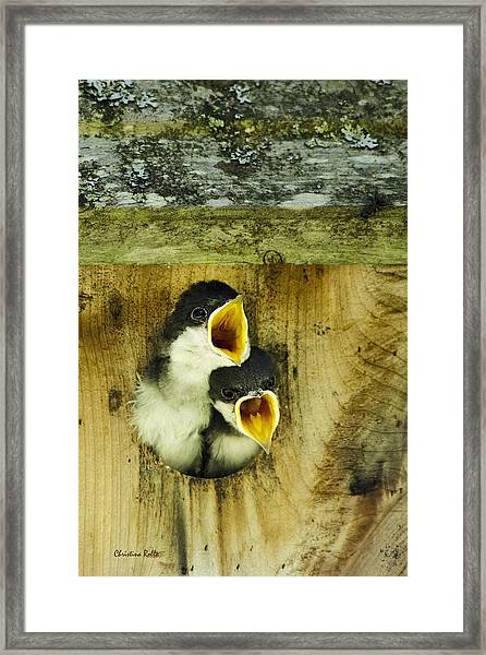 Screaming Hungry Framed Print