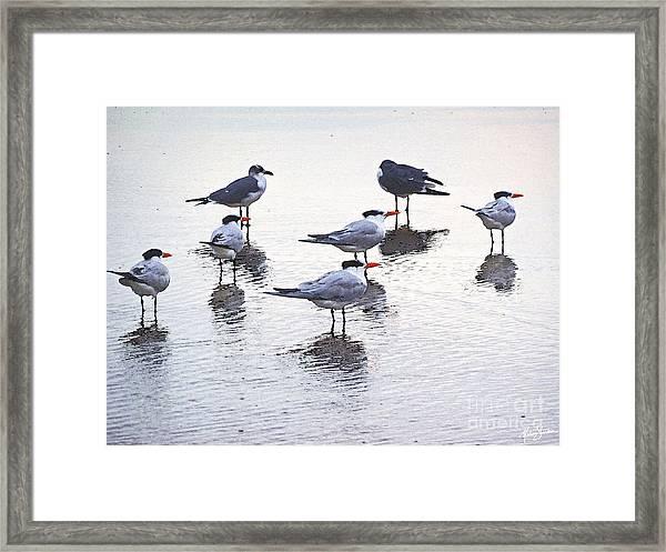 Sea Birds No.2 Framed Print