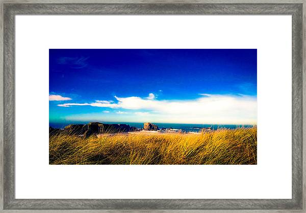 Sea Grass At Elephant Rock Framed Print
