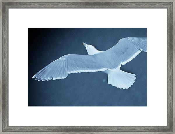 Sea Gull Over Icy Water Framed Print