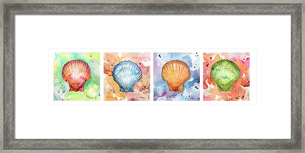 Sea Shells In Contrast Framed Print