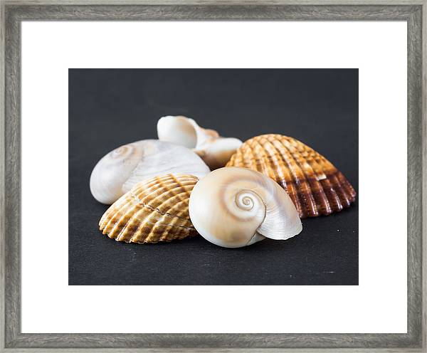 Sea Shells On A Black Background Framed Print