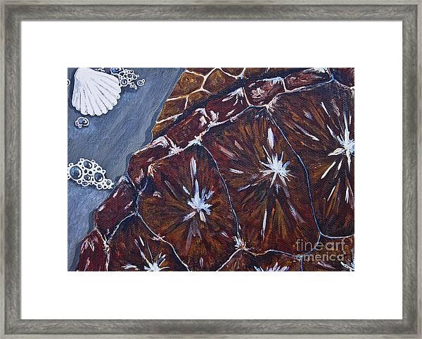 Sea Turtle Surf Framed Print