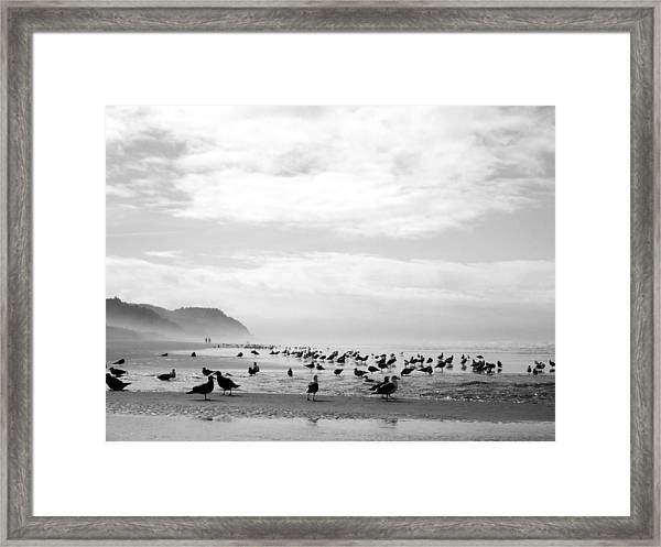 Seabird Horizon Framed Print
