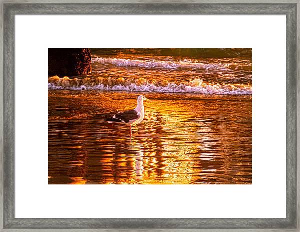 Seagul Reflects On A Golden Molten Shore Framed Print