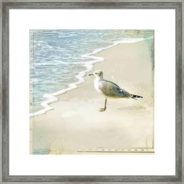 Seagull 2 Marco Island Framed Print