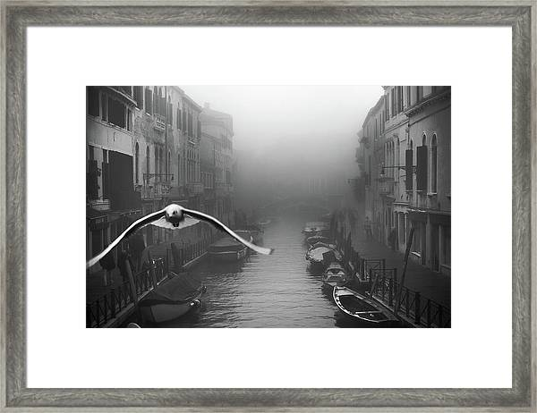 Seagull From The Mist Framed Print
