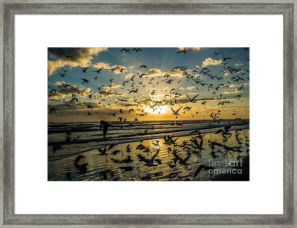Seagull Migration Framed Print by Mina Isaac