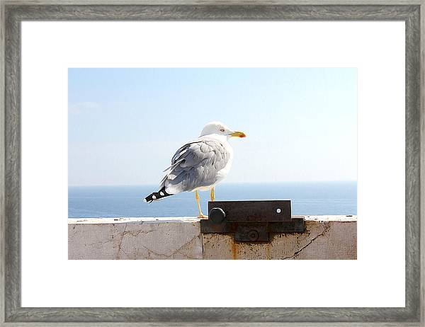 Framed Print featuring the photograph Seagull by Meghan OHare