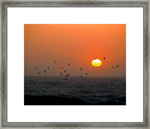 Framed Print featuring the photograph Seagull On Sunset by William Havle