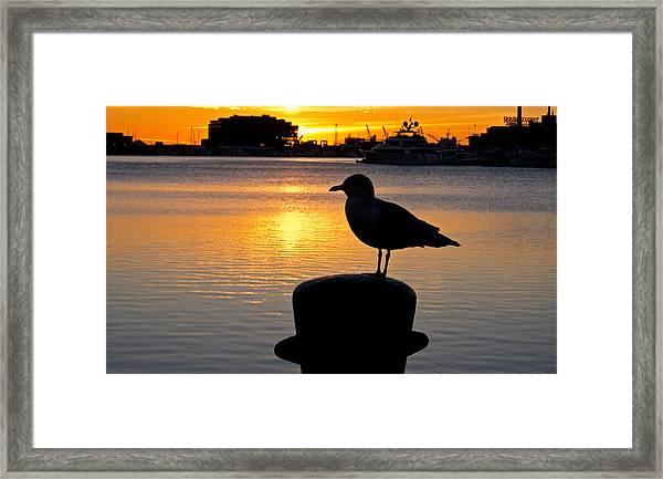 Seagull Silhouette Sunrise Framed Print