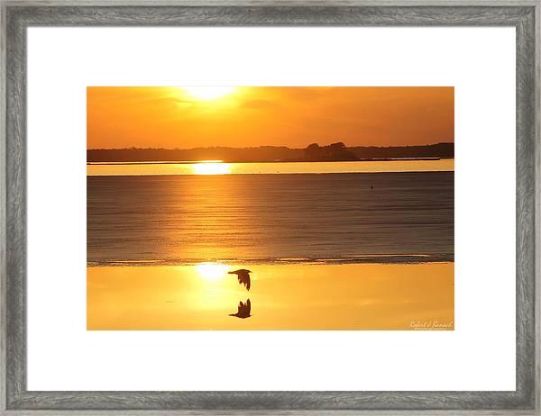 Seagull Through Sunset Framed Print