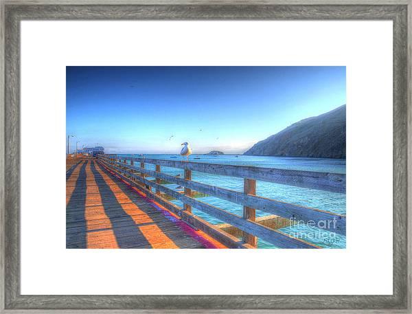 Seagulls And Ocean Framed Print