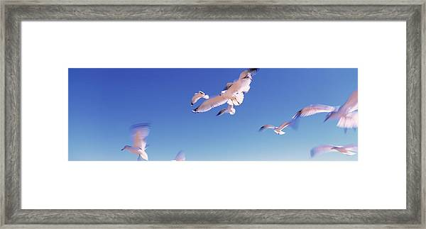 Seagulls Flying Along Route A1a Framed Print