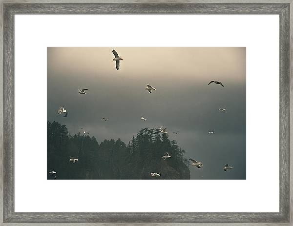 Seagulls In A Storm Framed Print