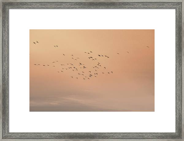 Framed Print featuring the photograph Seagulls In The Mist by Beth Sawickie