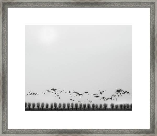 Seagulls Over The Fields Framed Print by Yvette Depaepe