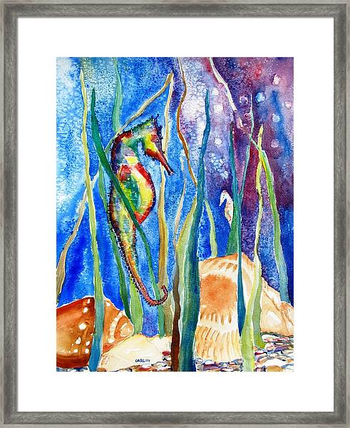 Seahorse And Shells Framed Print