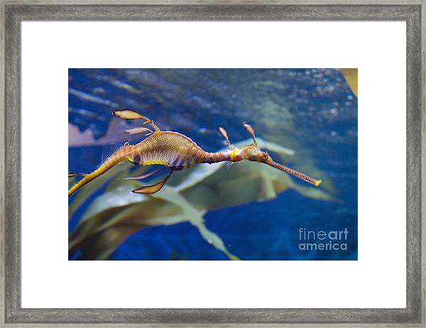 Seahorse See Horse Framed Print