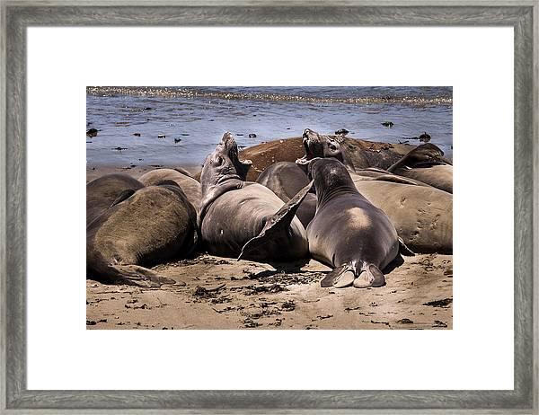 Seal Team 3 By Denise Dube Framed Print