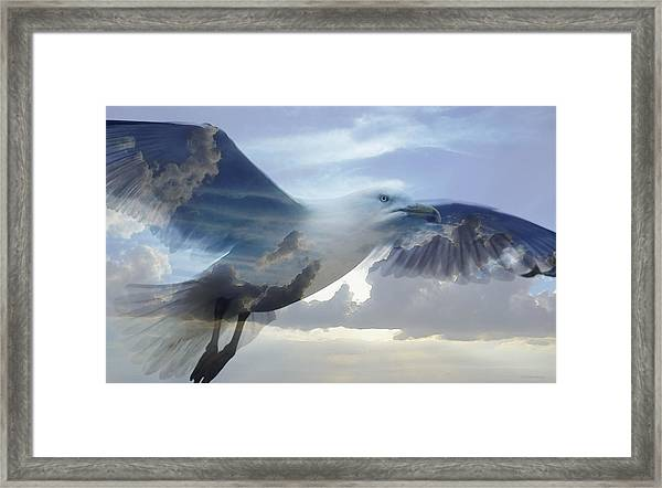 Searching The Sea - Seagull Art By Sharon Cummings Framed Print