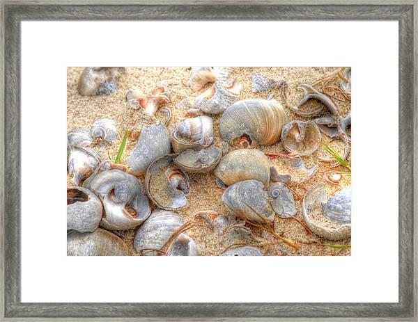 Seashell 01 Framed Print