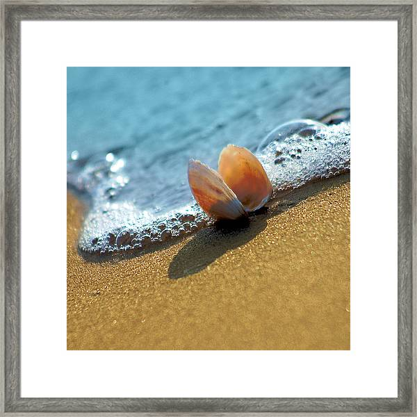 Seashell On The Coast With Wave And Bubble Framed Print