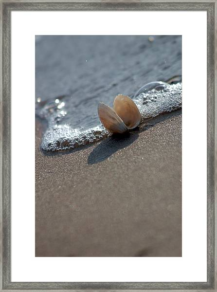 Framed Print featuring the photograph Seashell On The Coast With Wave by Raimond Klavins