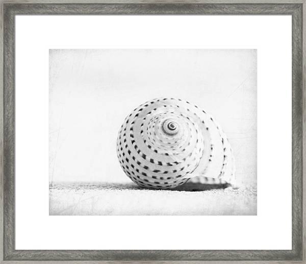 Seashell Voices Framed Print