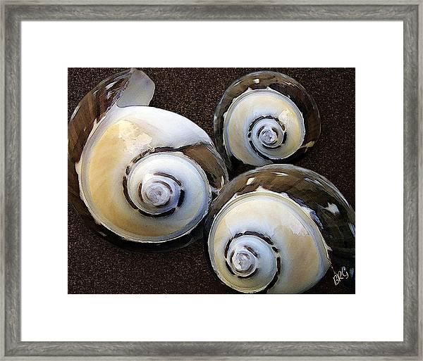 Seashells Spectacular No 23 Framed Print