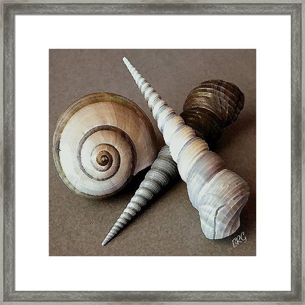 Seashells Spectacular No 24 Framed Print
