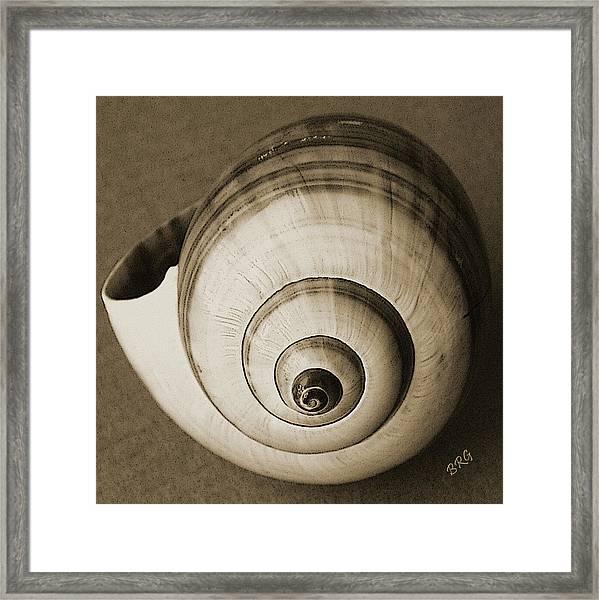 Seashells Spectacular No 25 Framed Print