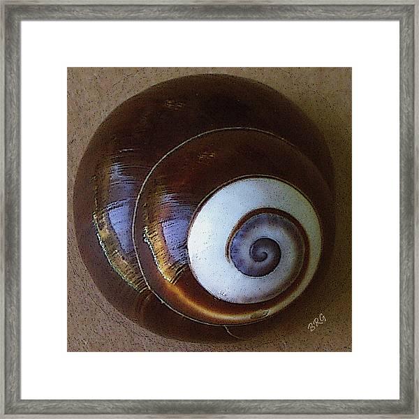 Seashells Spectacular No 26 Framed Print